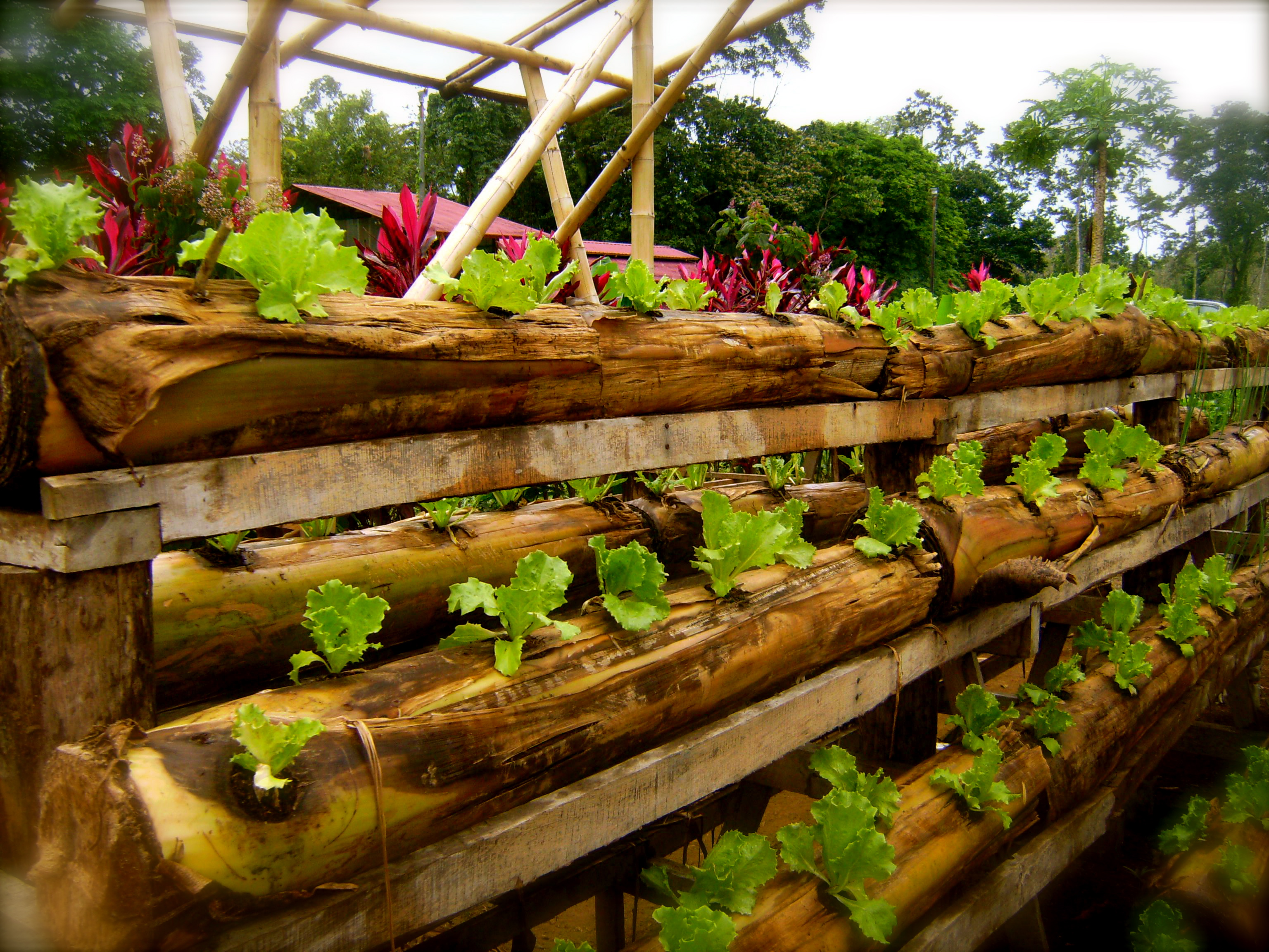 diyhydroponic: Hydroponics With Bamboo